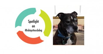 #Spotlight on: @Ubiquitousbdog#Spotlight on: @Ubiquitousbdog